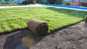 Укладка газона на небольшом дачном участке