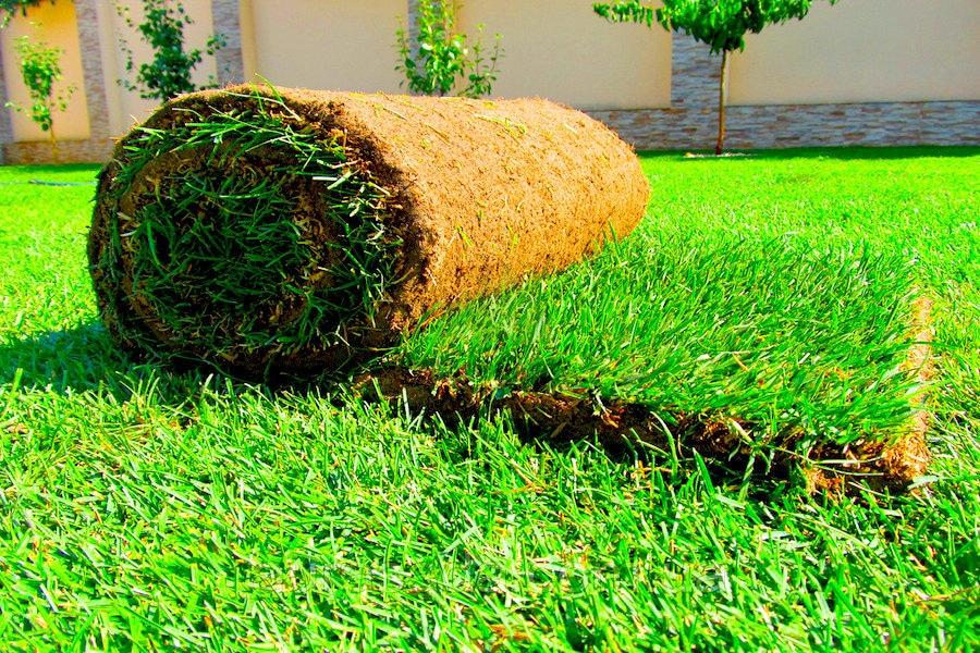 Рулонный газон Неприхотливый
